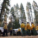 california state guard fire fighting hand crew